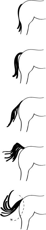 wat zegt de staart van je paard