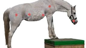 knoppen op je paard