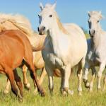 rennende paarden by Cowboy Dave
